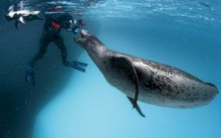 Касатка напала на человека на берегу – киты опасны для людей