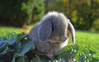 Кролик перестал есть что делать