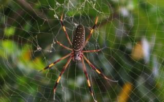 Как зимуют пауки в России?