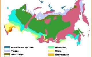 Растения и животные пустыни России