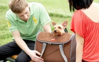 Как выбрать переноску для собаки?