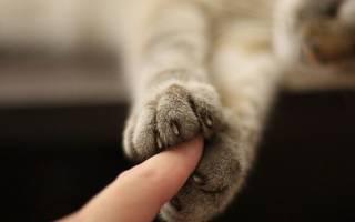 Описание снимка при гиперпаратиреозе у кошек