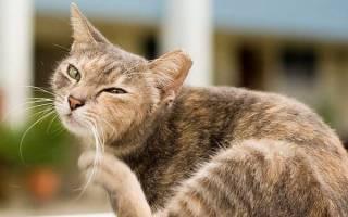 У котенка грязные уши внутри что делать