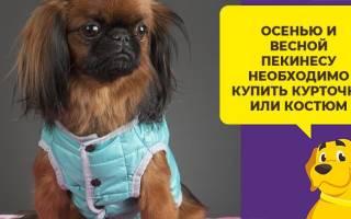 Одежда для собак пекинесов