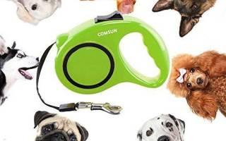 Что лучше поводок или рулетка для собаки?
