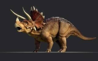 Динозавр трицератопс описание
