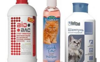 Сколько стоит шампунь от блох для кошек?
