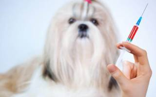 После прививки собака плохо себя чувствует