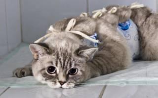 Как долго кошка отходит от наркоза – операции у кошек
