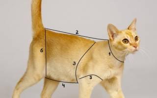 Как сделать одежду для кота, платье для кошки