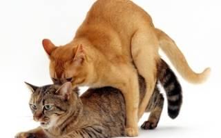 Капли для кошки от хотения кота – таблетки для кошек во время течки