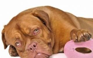 Какие породы собак ходят в лоток?