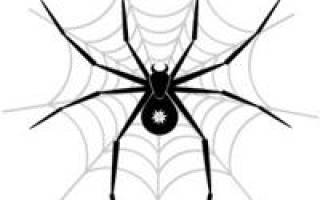 Сколько ног у паука ответ?