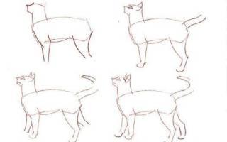 Как нарисовать британскую кошку – недовольный кот порода