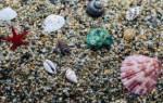 Роль моллюсков в природе и жизни человека