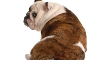 Болезни позвоночника у собак