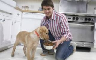 Кормить собаку до или после прогулки: рацион 2 месячного щенка