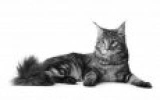 Какая порода кошек любит детей?