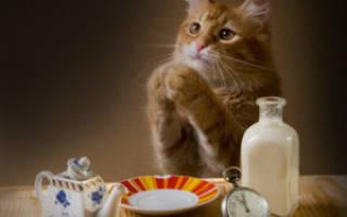 Почему кот много ест и не наедается – кошка очень