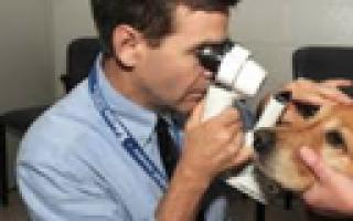 Бош софт корм для собак отзывы, Bosch soft