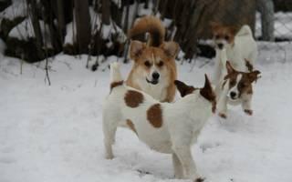 Какие породы собак долгожители?