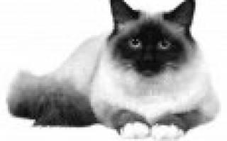 Котенка какой породы лучше завести для ребенка?