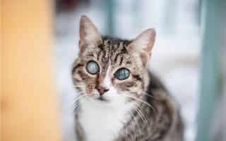 Как понять что котенок слепой – как проверить зрение у кошки?