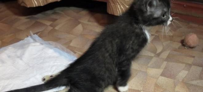 У кота отказывают задние лапы что делать: паралич у кошек