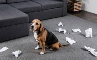 Каким командам можно научить щенка?