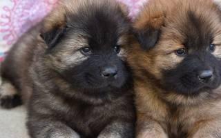 Как ведет себя щенок в новом доме?