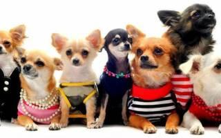 Какая порода собак больше подходит для квартиры?