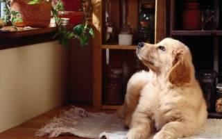 Породы собак которые не лают в квартире?