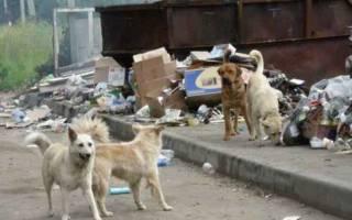 Чем опасны бездомные собаки?