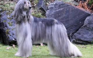 У собаки сильно лезет шерсть что делать, почему щенок линяет?