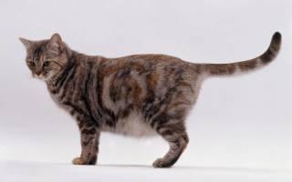 Как узнать кошка беременна или нет?