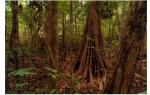 Географическое положение переменно влажных лесов