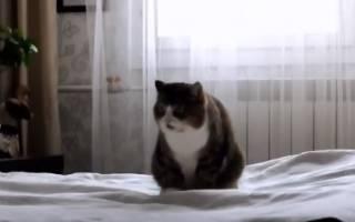Почему кошка стала писать на кровать – кот ссыт на вещи