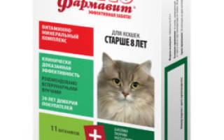 Как повысить иммунитет кошке?