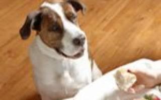 Как отучить щенка попрошайничать?