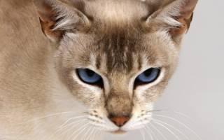 Как понять что кошка загуляла?
