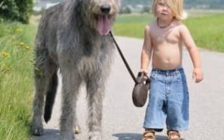 Порода собак волкодав фото – ирландский дог