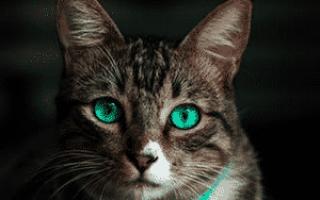У кошки выделения из матки белого цвета