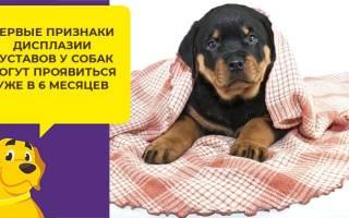 Что такое дисплазия тазобедренных суставов у собак?
