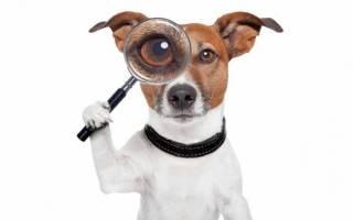 Как обучить щенка команде рядом?