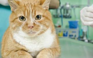Что нужно для кастрации кота?