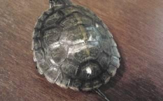 Почему у красноухой черепахи белеет панцирь?