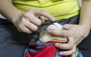 Энтерофурил для кошек при поносе