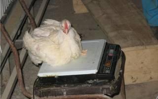 Вес цыплят бройлеров по дням таблица