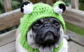 Как вязать шапку шлем для собаки?