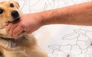 Как отучить щенка грызть руки?